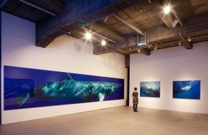 Minke-Whale-30-feet